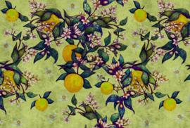 ASCreation Walls by Patel Fotobehang Grapefruit Tree 1 DD114257 Fruit/Vruchten/Boom/Natuurlijk