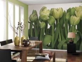 Komar Stories 8-900 Tulips/Planten/Bloemen/Tulpen Fotobehang - Noordwand