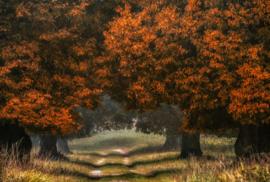AS Creation AP Digital4 Behang DD109271 LDG/Grote Boom/Bos/Natuur Fotobehang