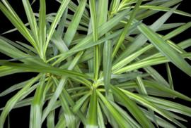 AS Creation AP Digital4 Behang  DD109151 Jungle Plant 1/Botanisch/Planten Fotobehang