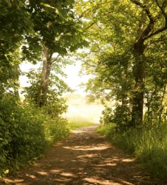 Dimex Fotobehang Forest Path MS-3-0093 Bospad/Natuur/Bomen/Bos