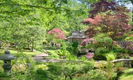 We Live by Light/Holland Japanse Tuin 9758 - Fotobehang - Noordwand
