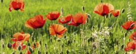 Dimex Fotobehang Poppy Field MP-2-0092 Panorama/Bloemen/Natuur/Klaproos/Botanisch
