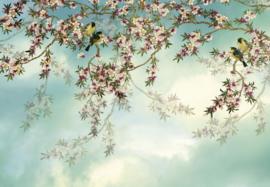 Komar Stories  8-213 Sakura/Bloemen/Bomen Fotobehang - Noordwand