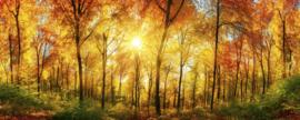 Dimex Fotobehang Sunny Forest MP-2-0067 Panorama/Bos/Bomen/Natuur Behang