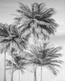 Komar Home Imagine Edition 4 Fotobehang X4-1019 Cocco/Palmbomen/Bomen/Natuurlijk