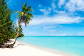 AS Creation Wallpaper 3 XXL Fotobehang 471691 Tropical Sea 1/Tropisch/Strand/Palmboom