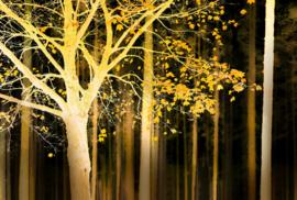 AS Creation AP Digital4 Behang DD109056 Artwork Tree/Boom/Bladeren/Bos/Botanisch Fotobehang