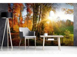 Dimex Fotobehang Forest Walk MS-5-0065 Herfst/Landschap/Natuur