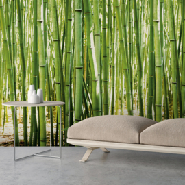Dutch Wallcoverings One Roll One Motif Behang A36901 Bamboo/Bamboe/Bomen/Natuurlijk