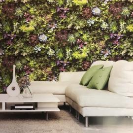 Noordwand Evergreen Fotobehang G45388 Vetplanten/Botanisch/Natuurlijk
