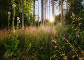 Komar Home Imagine Edition 4 Fotobehang X7-1005 Summer Glade/Botanisch/Bladeren/Natuurlijk