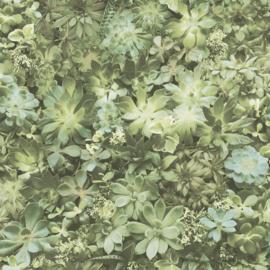 Noordwand Evergreen Behang 7320 Vetplanten/Planten/Botanisch/Natuurlijk
