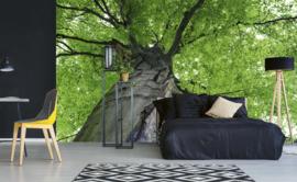 Dimex Fotobehang Treetop MS-5-0101 Boom/Natuur/Modern