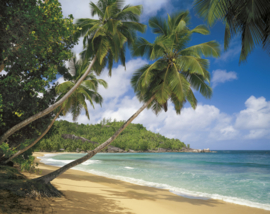 Komar Home Imagine Edition 4 Fotobehang 8-308 Tropical Sea/Tropisch/Strand/Palmboom