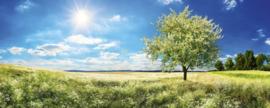Dimex Fotobehang Blossom Tree MP-2-0096 Panorama/Boom/Landschap/Natuur