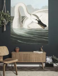 Kek Behang PA-001 Trumpeter Swan/Zwaan/Flora & Fauna/Dieren Behangpaneel/Fotobehang