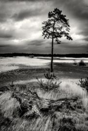 Onsfotobehang Fotobehang SL1186 Natuur/Bomen/Landschap/Modern/Grijs