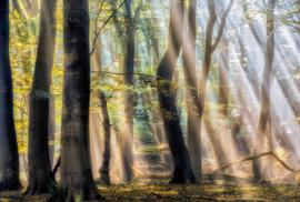 AS Creation AP Digital4 Behang  DD109321 The Enchanted Forest/Bomen/Bos/Natuur Fotobehang