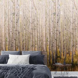 Dutch Wallcoverings One Roll One Motif Behang A42601 Bomen/Natuur/Birch Tree/Berkenboom