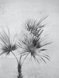 Eijffinger Terra Fotobehang 391567 Palm Greyscale/Natuurlijk/Botanisch/Palmboom