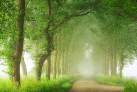 AS Creation AP Digital4 Behang  DD109266 Into The Mist/Natuur/Bomen/Bos Fotobehang
