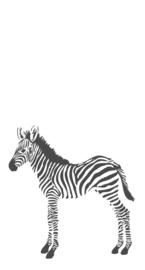 Origin Precious Behang Fotobehang 352-357217 Zebra/Dieren/Kinderkamer/Zwart/Wit