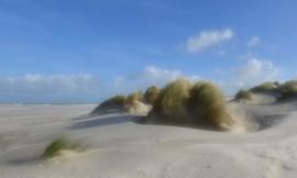 We Live by Light/Holland Schiermonnikoog duinen 0477 - Fotobehang - Noordwand