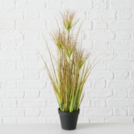 Plant in pot - Glanshaver - 60cm - Groen - Kunststof