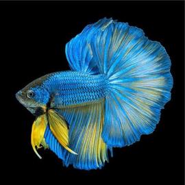 Tropische vissen schilderijen