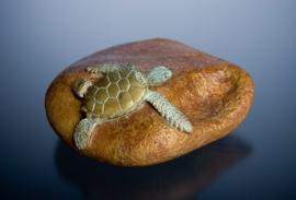 Paperweight bronzen zee schildpadje