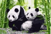 Schilderen op nummer, panda beren.