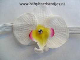 Voor de allerkleinste super smal wit haarbandje met orchidee.