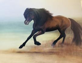 Paardenschilderij 'Kaenn, IJslander'