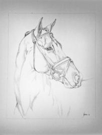 Portrettekening van je paard in grafiet op 200 grams papier 70 x 100 cm