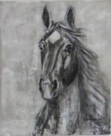 Paardenschilderij 'Bailey'