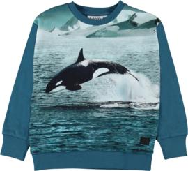 Molo * FALL 2019 * Madsim jumping orca