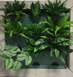 Planten wand basis set - GROEN