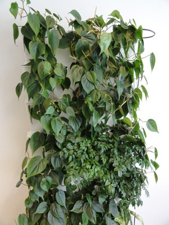 wittemodulesplantenwand(23).jpg