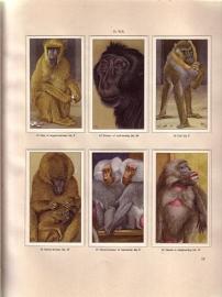A.F.J. Portielje - Apen en hoefdieren in Artis [compleet]