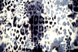 0 a001h tricot panterprint zwart grijs