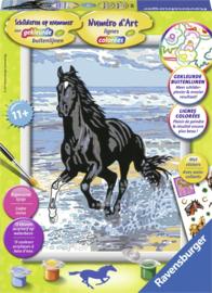 Schilderen op nummer Serie Classic Paard in de branding.-C- Formaat 18 x 24 cm