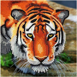Chrystel Card Kit-Diamand Painting The Tiger(partial)-Craft Buddy- Multi Color