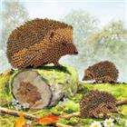 Chrystel Card Kit-Diamand Painting Happy Hedgehogs-Craft Buddy- Multi Color