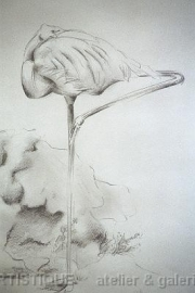 Flamingo, potlood