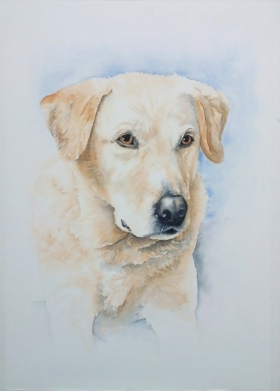 Aquarel hond opdracht aquarelverf