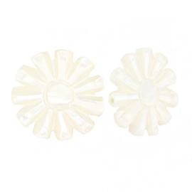 Schelp kralen sun White (natuurlijke kleur) per stuk