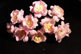 WILD ORCHID CRAFTS - SOFT PINK COSMOS DAISIES