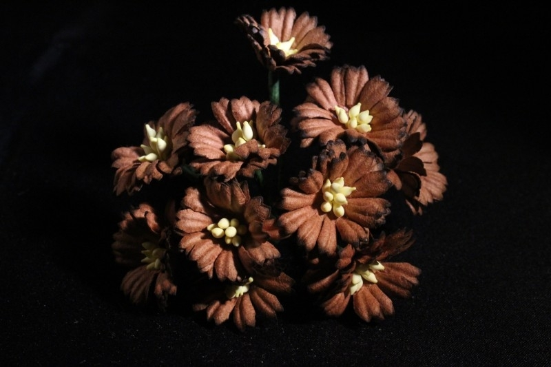 WILD ORCHID CRAFTS - BROWN COSMOS DAISIES