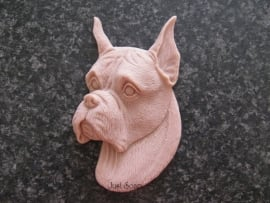 Boxer met gecoupeerde oren